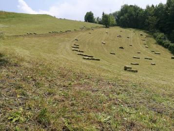 Acquisizione terreni agricoli